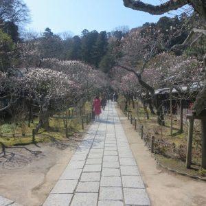 東慶寺境内の参道